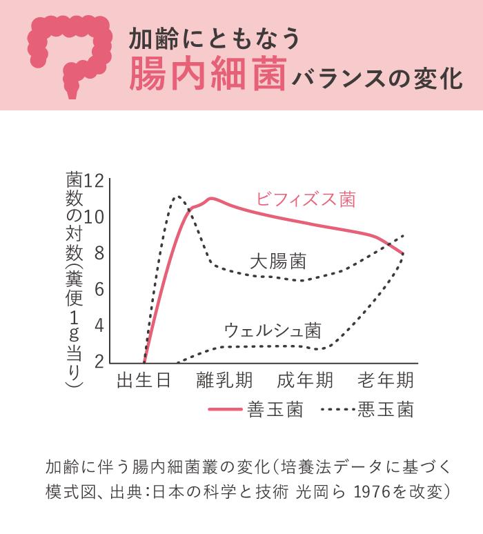 加齢にともなう腸内細菌バランスの変化